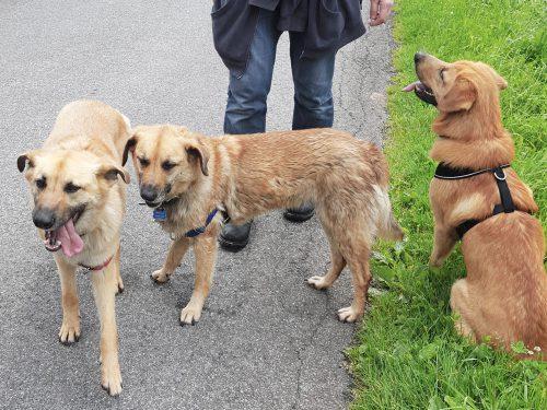Left to Right: Eya, Nuka, Manuk